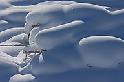 Mounds of snow, Kootenay National Park, British Columbia, Canada
