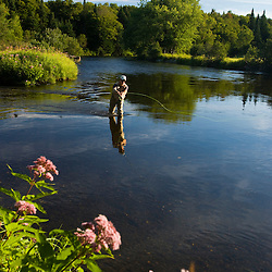 A man fly-fishing on the Connecticut River in Clarksville, New Hampshire. At confluence with Indian Stream. Joe-pye weed is in the foreground.