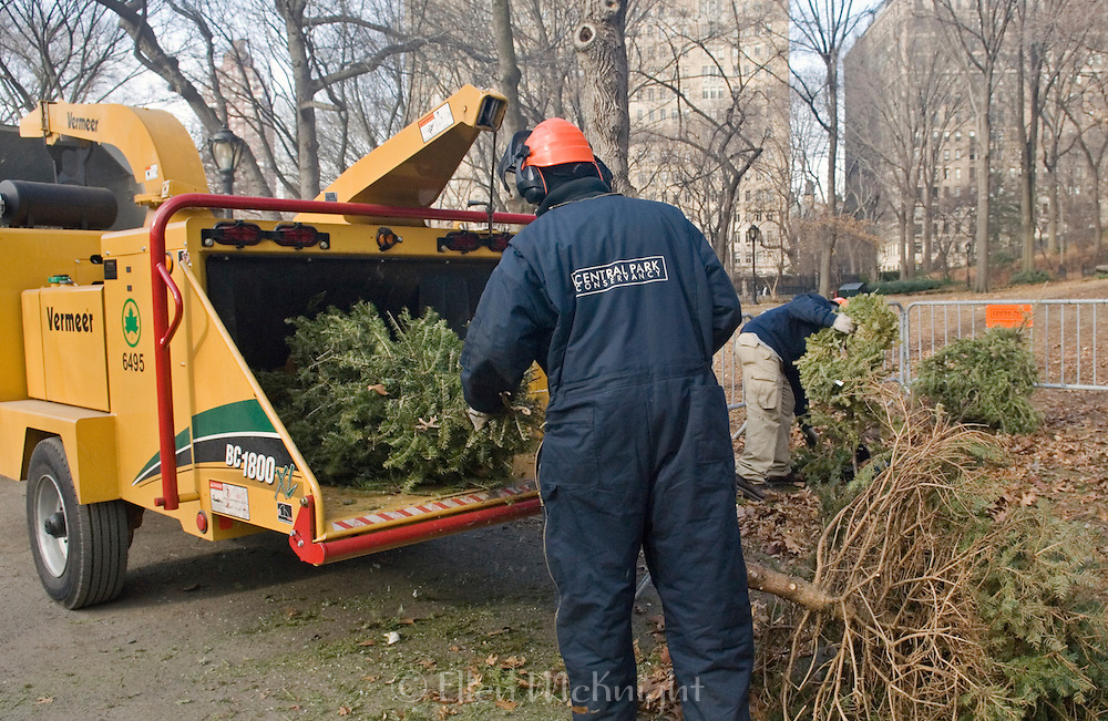 "New York City's 2008 ""Mulchfest"" took place on January 5th & 6th. Park workers and volunteers throughout the five boroughs collected Christmas trees from various drop-off points to turn into mulch."