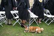 Cindy Shehatou of Syracuse and her dog Geronimo at the University of Rochester's Commencement ceremony in Rochester on Sunday, May 15, 2016.