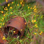 Nature Reclaims A Rusted Artifact - Pottsville - Merlin, Oregon - Lensbaby