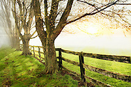A Line Of Trees And Wooden Fence Bordering A Pasture During A Foggy Sunset, Southwestern Ohio, USA