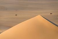 Dünen der algerischen Sahara