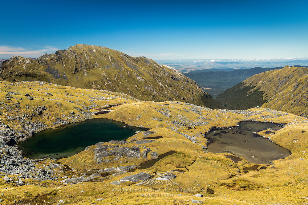 Two different colored tarns viewed from the ridge of Mount Burns, Fiordland, New Zealand