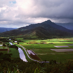 Taro fields in Hanalei Valley on the island of Kauai.