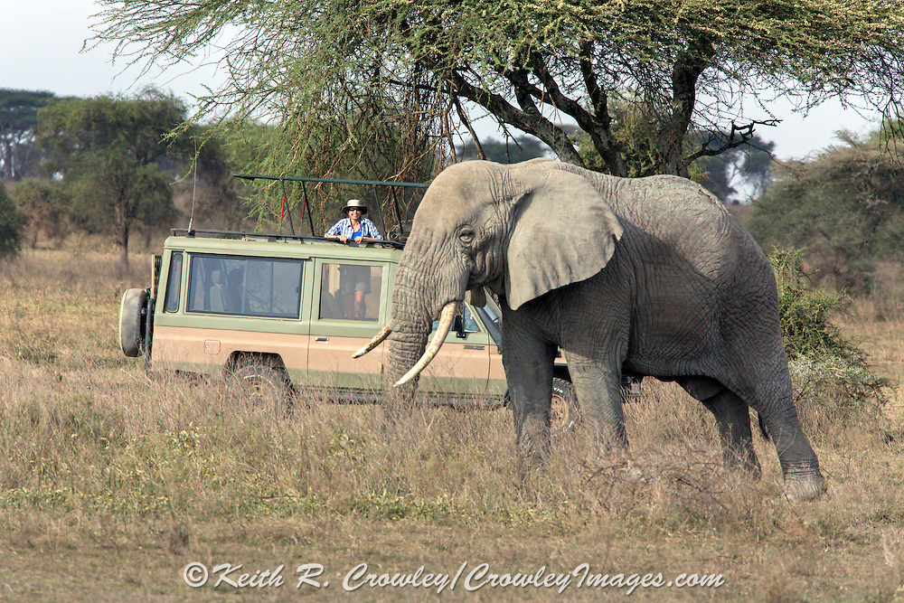 A Visitor watches an Elephant from a specialized tour vehicle in East Africa