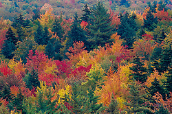 United States, New Hampshire. colorful trees with fall foliage