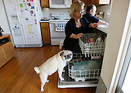 Chris Kotzian (R) and wife Barb clean up in their kitchen with dog Hogan in Thornton, Colorado March 25, 2010.  Both about four-feet-tall,  the Kotzians are both achondroplasia dwarfs, a rare genetic disorder of bone growth.  Preferring to be called little persons they both are active in the Little People of America, the only dwarfism support organization that includes all 200+ forms of dwarfism.  REUTERS/Rick Wilking (UNITED STATES)