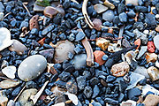 Parts of the Thames foreshore are thick with old lumps of coal, animal bones, and fragments of brick.
