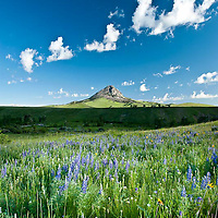widflowers and green grass in the spring along the rocky mountain front, haystack butte near augusta, montana, russel country, montana, usa, russell