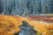 Early autumn snow dusts the landscape surrounding Warm Creek in Yellowstone National Park, Montana.