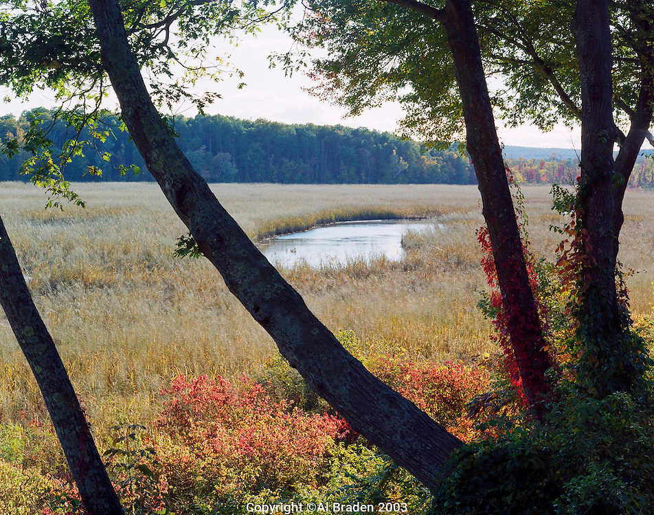 Wild rice at Walebone Cove is important for fall bird migration through the Connecticut River estuaries, Hadlyme, CT