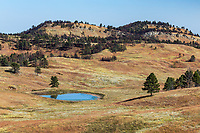 The rolling hills of Custer State Park are a mixture of watering holes,  prairie grasslands and ponderosa pine forests.  South Dakota.