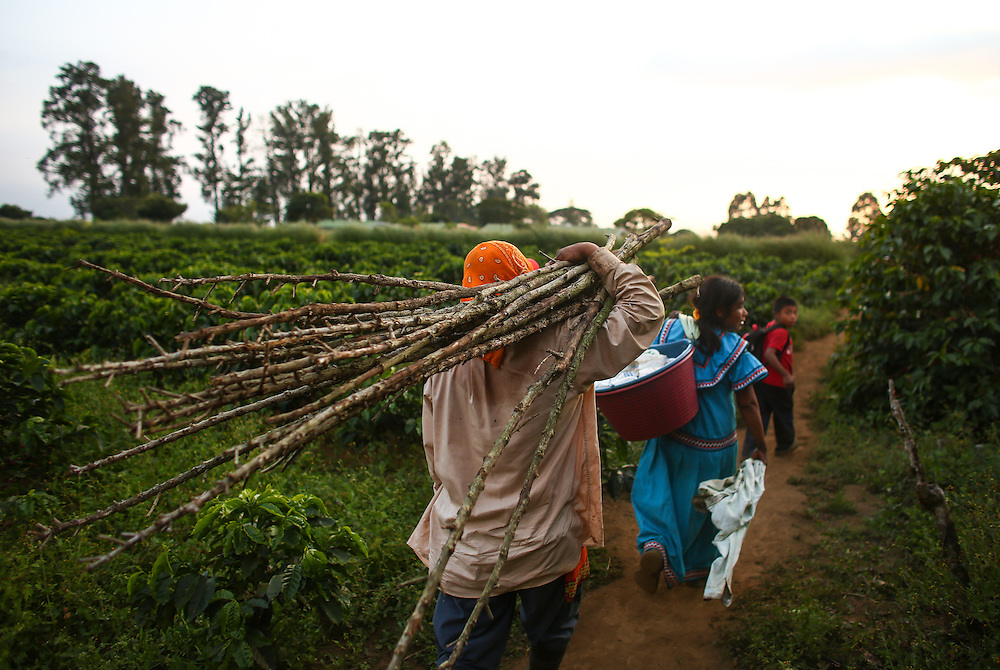 Coffee pickers carry firewood on the Hacienda Alsacia farm after a shift during the 2016 Starbucks Origin Experience for Partners. Photographed in January 2016. (Joshua Trujillo, Starbucks)