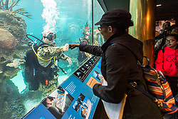 170524-N-SF508-030 <br /> NEW YORK (May 24, 2017) Navy Diver 1st Class Sean Dargie, assigned to Mobile Diving and Salvage Unit (MDSU) 2, fist bumps a visitor at the New York Aquarium during the 29th annual Fleet Week New York. Fleet Week New York is an unparalleled opportunity for the citizens of New York and the surrounding tri-state area to meet Sailors, Marines and Coast Guardsmen, as well as witness firsthand the latest capabilities of today's maritime services. The weeklong celebration has been held nearly every year since 1984. (U.S. Navy photo by Mass Communication Specialist 2nd Class Charles Oki/Released)