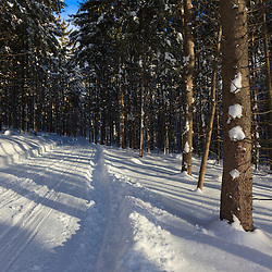 A cross country ski trail at the Notchview Reservation in Windsor, Massachusetts. The Trustees of Reservations.