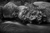 Merced River Meditation. Image taken with a Nikon D3 camera and 24-70 mm f/2.8 lens (ISO 200, 70 mm, f/16, 2 sec). Camera mounted on a tripod. Monochrome Version.
