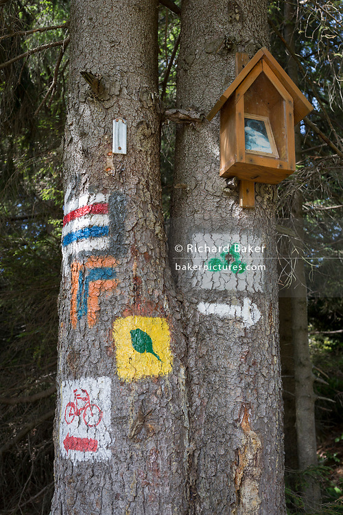 Alongside a small shrine, painted Polish hiking and cycling route signs on a spruce tree, on 20th September 2019, Obidza, near Szczawnica, Malopolska, Poland.
