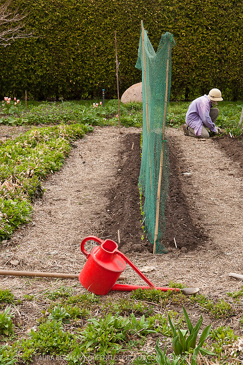 A red watering can lies  at the front of a garden bed in early spring. A gardener wearing a straw hat is kneeling while planting at the back of the garden.