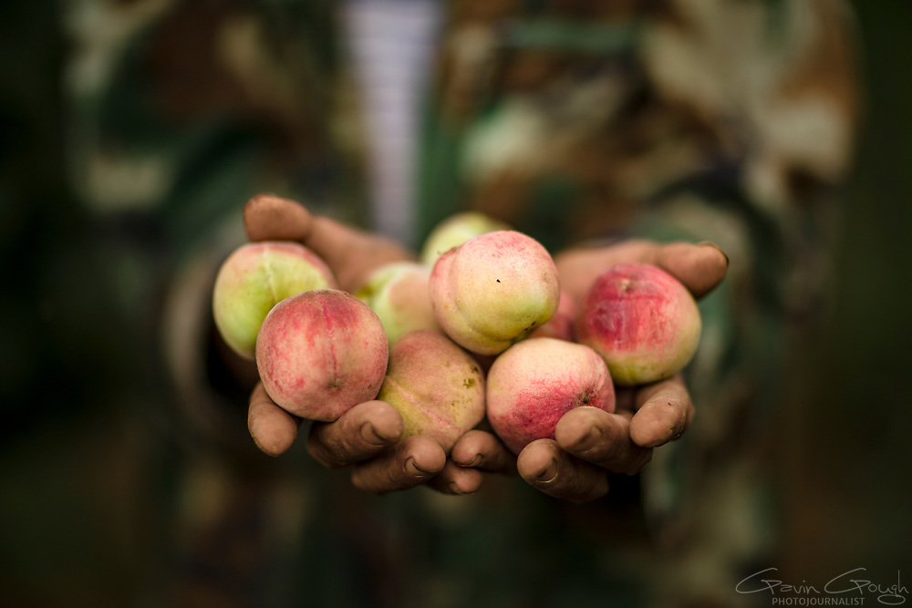 Xiong holds a handful of peaches grown in his orchard. The training he received from the local Disabled Persons' Federation has enabled him to retrain as a farmer.