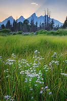 Wildflowers and the Teton Range at sunset seen from Schwabacher's Landing, Grand Teton National Park Wyoming