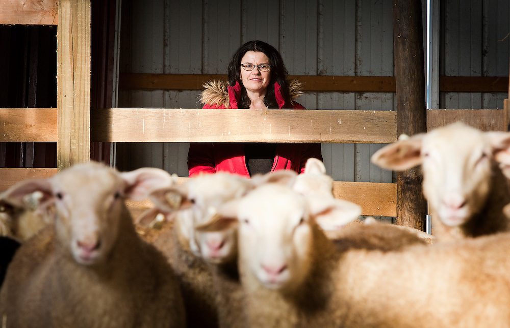 WESTBY, WI — DECEMBER 9: Brenda Jensen, owner of Hidden Springs Creamery, poses for a portrait in the adolescent sheep barn. Jensen and Hidden Springs Creamery have won numerous National and International awards for their sheep cheeses.