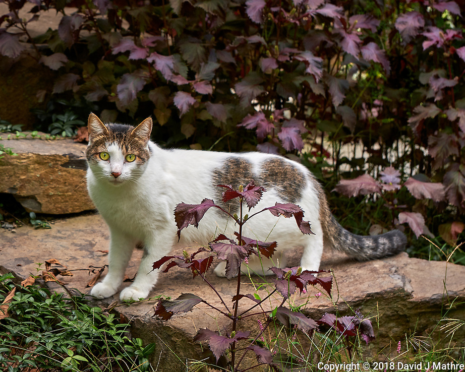 Neighbor's Cat. Image taken with a Fuji X-H1 camera and 80 mm f/2.8 macro OIS lens