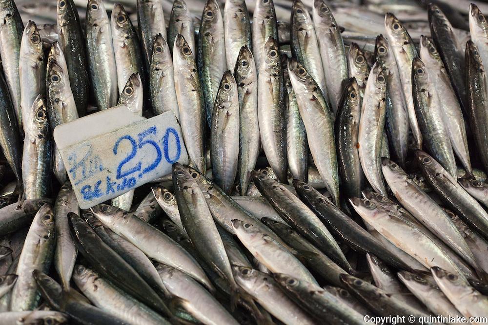 Fresh sardines in Sandakan market, Sabah, Borneo