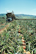 Pineapple fields, Lanai, Hawaii.