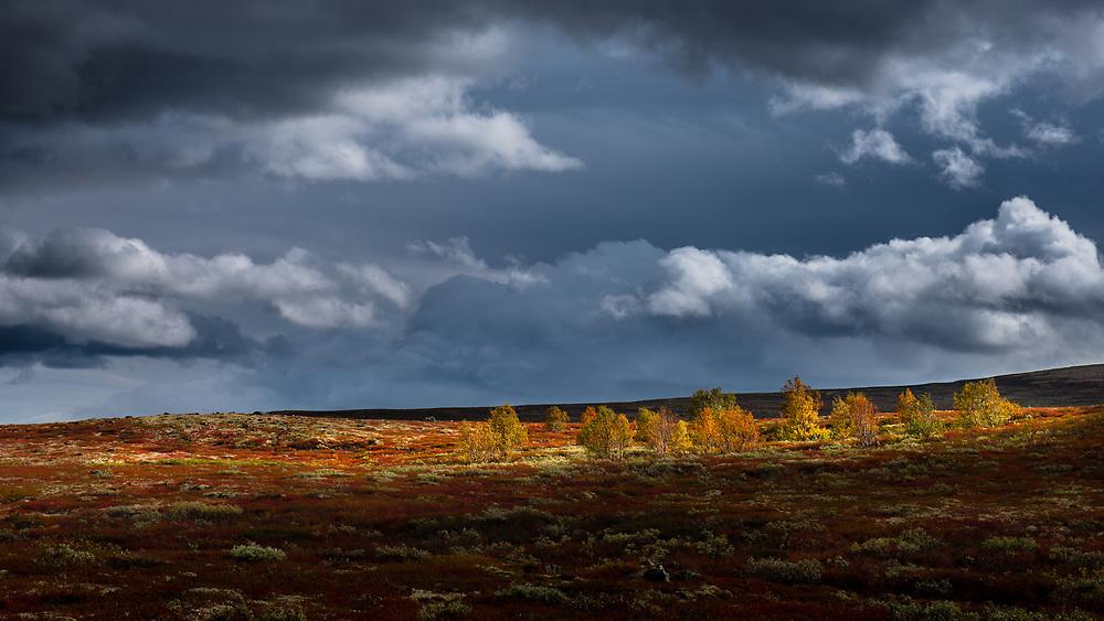 Dovrefjell, Norway. Sept 2012.