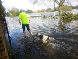 © London News Pictures. 27/04/2013 . London, UK.  A man running with his dog through flood water where the River Thames has broken it's banks at  Chiswick in West London on Saturday, April 27, 2013. The flooding was caused by an unusually high spring tide. Photo credit : Stephen SImpson/LNP