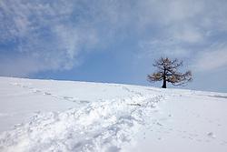 THEMENBILD - Ein Baum auf einer verschneiten Bergkuppe mit Spuren im Schnee am 26. Februar 2018 am Heulantsch bei Fladnitz an der Teichalm // THEMES PICTURE - a tree on a snowy mountain with tracks in the snow near the Teichalm on 26 February 2018, Fladnitz, Austra. EXPA Pictures © 2018, PhotoCredit: EXPA/ Erwin Scheriau