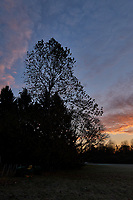 Autumn Backyard Sunrise Panorama. Two of nine images taken with a Leica CL camera and 18 mm f/2.8 lens (ISO 200, 18 mm, f/11, 1/60 sec). Raw images processed with Capture One Pro and the composite created using AutoPano Giga Pro.