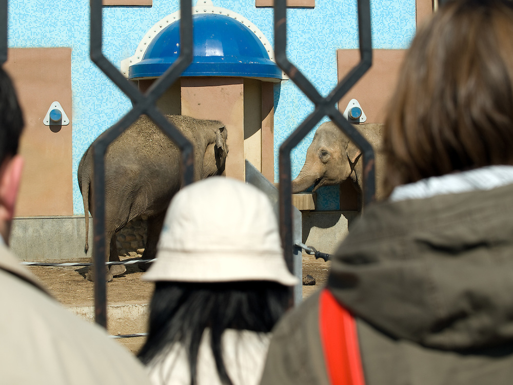"""Elefanten im Moskauer Zoo. Der Moskauer Zoo wurde 1864 eröffnet und ist damit der älteste Zoo Russlands. Hier werden rund 1000 Tierarten mit über 6.500 Exemplaren, vom Rotwolf über den Zobel bis zu den Elefanten, gehalten. Im """"Exotarium"""", einer Art Aquarium, kann man Unterwasserwelten samt Fauna tropischer Meere bewundern. Der Zoo wurde von 1990 bis 1997 grundlegend modernisiert und auf seine heutige Fläche von rund 21,5 Hektar erweitert. <br /> <br /> Elephants at Moscow Zoo - train for children infront of a monument at the Moscow Zoo. The Moscow Zoo is the largest and oldest zoo in Russia - It was founded in 1864."""