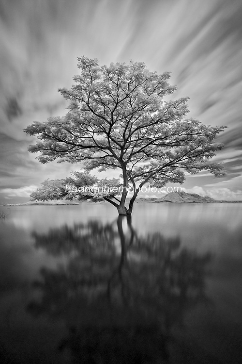 Vietnam Images-Fine art-Infrared-nature. hoàng thế nhiệm