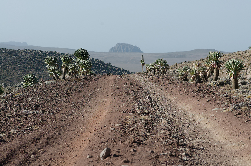 Road on top of the Bale mountains, Ethiopia,Africa