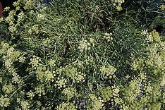 Venezia - erbe e fiori di barena