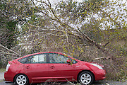 A downed tree lays on top of a car at an auto dealership after Hurricane Matthew passed through causing flooding and light damage to the area October 8, 2016 in Mt Pleasant, South Carolina. The hurricane made landfall near Charleston as a Category 2 storm but quickly diminished as it moved north.