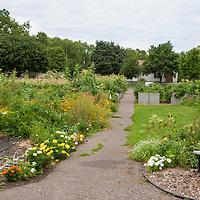 The Dowling Community Garden
