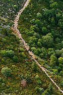 France, Languedoc Roussillon, Cevennes, Gard, massif du mont Aigoual, col de l'Asclier,  transhumance des moutons, vue aérienne