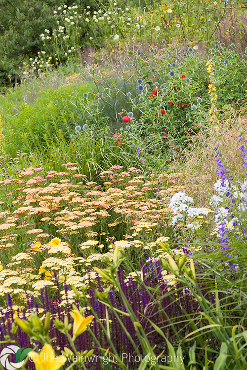 A lush herbaceous border, photographed in July, at Bluebell Cottage Gardens, Cheshire