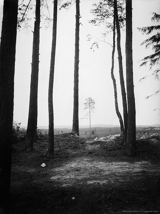 Fields through Trees, Fichtelgebirge near Leupoldsgrün, Bavaria, 1934