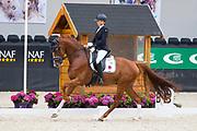 Annemiek van Venrooij - Blom's Hotmail<br /> WK Selectie Jonge Dressuurpaarden 2017<br /> © DigiShots