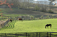 Otisville, New York - Horses graze in a field at Hidden Lake Farm on March 25, 2012.