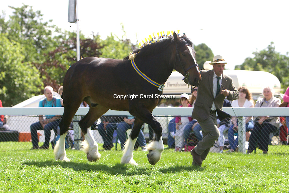 Mr W R Chapman's Bay Gelding<br />