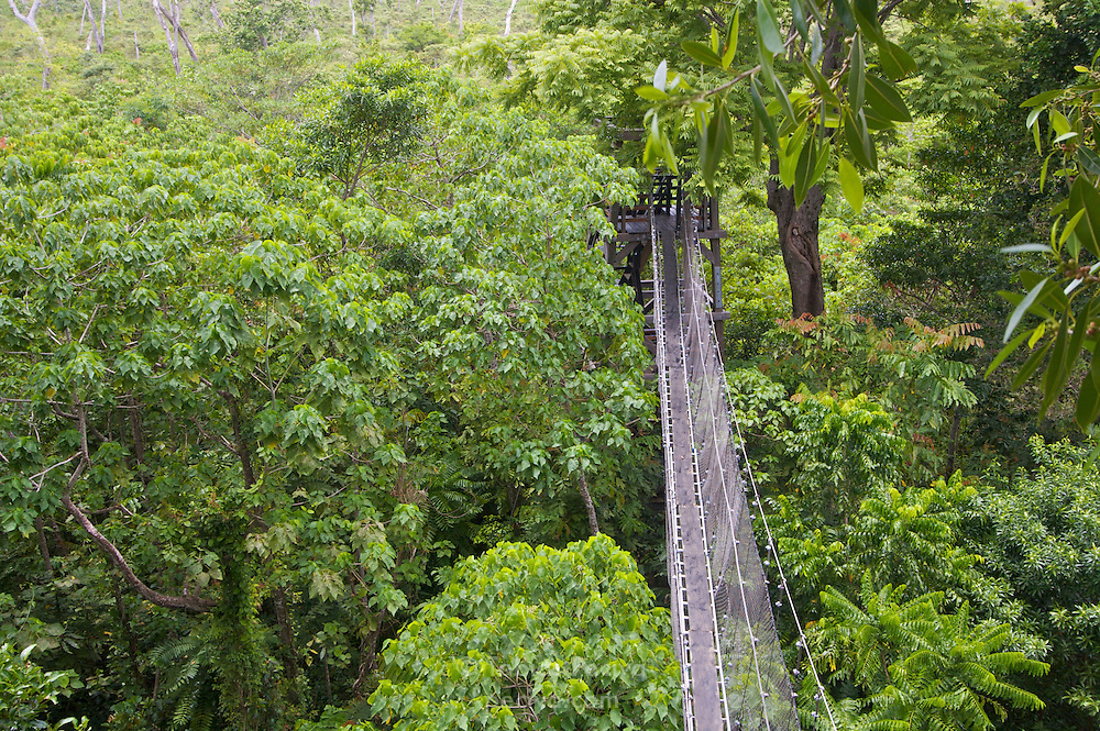 Rainforest swingbridge in the Falealupo Rainforest Reserve, Savaii, Western Samoa.