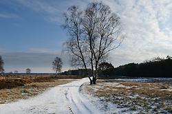 snow, sneeuw, winter, cold, wit, white