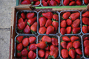 strawberries at an outdoor market, Akko, Israel