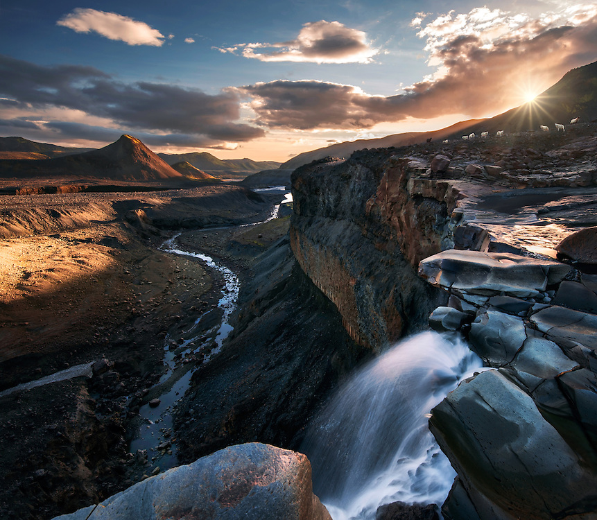 Sheep in Iceland thorsmork max rive