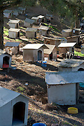 """Amazing Dog Town In Brazil<br /> <br /> In the city of Caxias do Sul lies a unique animal shelter run by the NGO Sociedade Amiga dos Animais (Friend of Animals Society). The NGO started the program in 1998. The complex is home to 1,600 dogs and 200 cats. Locals have taken to calling it a """"dog favela,"""" or dog slum. The favela's residents live on a 3-acre plot of land donated by the local municipality. According to the NGO, the animals consume about 12 tons of food per month. Many of the animals that end up at the favela are found on the streets, and some have been victims of abuse. The favela is constantly overcrowded, as the number of animals arriving daily exceeds the number of those being adopted. Stretched beyond its capacity, the NGO hopes to receive financial aid from the government to improve the favela's tattered conditions and increase the number of animals it can care for.<br /> ©Daniel Herrera/Exclusivepix"""